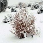 بالصور .. بياض الثلج يغطى تبوك وجبالها