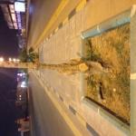 بلدية الأفلاج تقطع الأشجار بالتزامن مع أسبوع الشجره