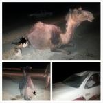 نجاة مواطن من حادث اصطدام جمل مساء اليوم في الأحمر