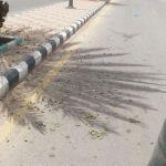 مواطنون : في طريق الملك سلمان  ثمار النخيل تحت عجلات السيارات