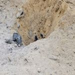 نجران.. استشهاد رجل أمن وإصابة 3 نتيجة مقذوفات من الجانب اليمني