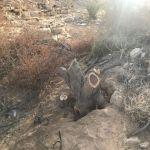 شاهد بالصور : قطع 71 شجرة خضراء في مليزق الأفلاج والقبض على الجناة