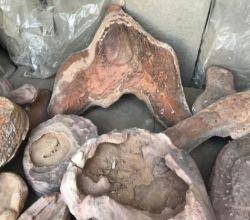 شاهد: مواطن يعثر على أحجار غريبة بصحراء شرق الأفلاج