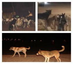 الكلاب الضاله تهاجم طفل اثناء عودته من صلاة الفجر اليوم الثلاثاء