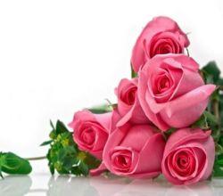 العلاج بالأزهار!