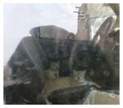 بلدية الأفلاج تتحفظ على سيارة لبيع الإيسكريم تتجول داخلها القطط