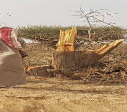 إعتداء على الأشجار الخضراء في وادي الهدار