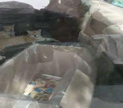 """بلدية الأفلاج توضح حقيقة مقطع """"سيارة الآيسكريم والقطط """""""