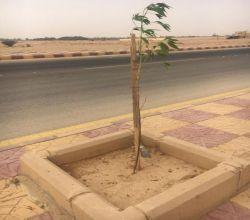 """بالصور: لجنة تنمية السيح تتفاعل مع أسبوع البيئة بزراعة الأشجار على الطرقات والأماكن العامة وتنظم برنامج """"واعي"""""""