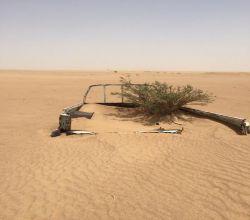 شاهد : هكذا اختبأت شجرة من مناشير الاحتطاب الجائر
