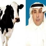 """العرفج يتمسك بتشبيهه للمرأة السعودية بـ""""البقرة"""" ويستغرب من غضب النساء عليه رغم أن """"البقرة"""" كائن مفيد..!"""