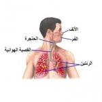 الأطفال المصابون بتوقف التنفس يعانون من فرط الحركة وصعوبات في التعل