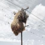 """شاهد: أضخم وأغرب """"أعشاش"""" للطيور في العالم"""