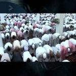 منع إنابة الأئمه لأحد في التراويح دون علم الشؤون الاسلاميه