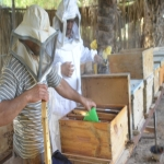 بالصور : مزرعة أم العسل وإنتاج القطفه الثانيه من عسل الزهور  .. الكمية محدودة
