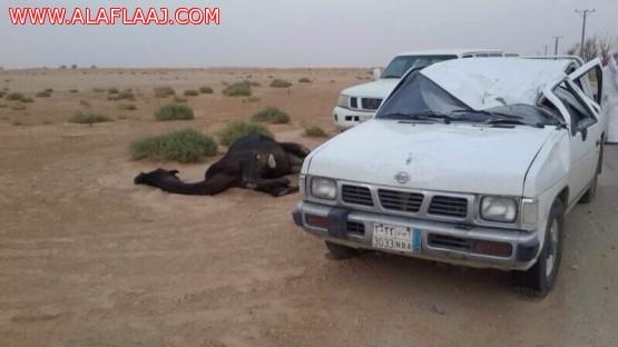 نجاة مواطن من حادث اصطدام بجمل غرب الأفلاج