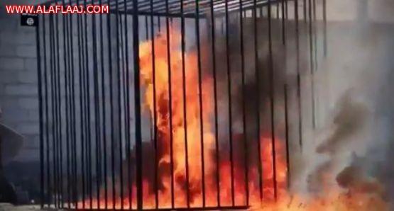 """السعودية تتابع الجريمة الوحشية التي اقترفها """"داعش"""" بحق الشهيد الطيار العربي"""