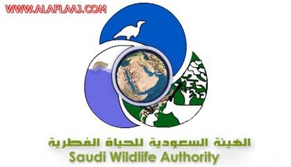 الإعلان عن توفر وظائف شاغرة في الهيئة السعودية للحياة الفطرية