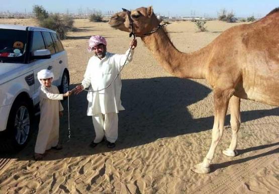 إماراتي يهدي خادمة ناقة تجاوبا مع دعوة حاكم دبي لتكريم العمال