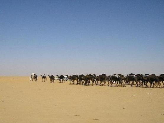 ربيع الأفلاج على قناة الساحة 3