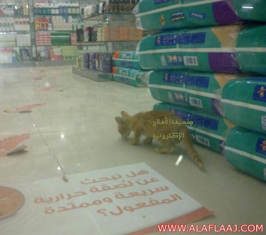 بالصور .. قطط تتجول داخل إحدى الصيدليات بالأفلاج !؟
